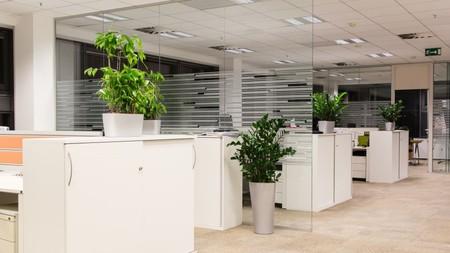 Kancelář s květinami
